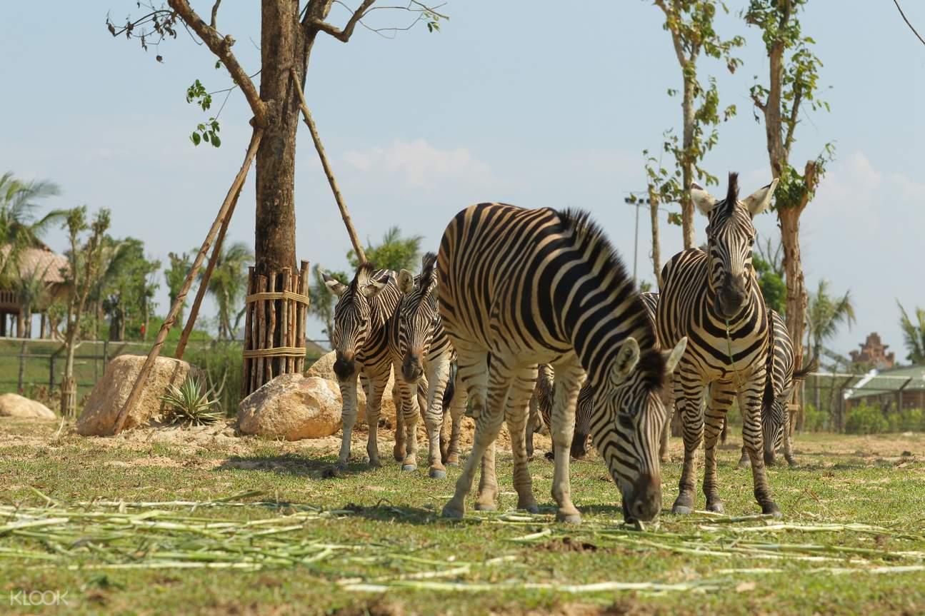 VinWonders Nam Hoi An safari